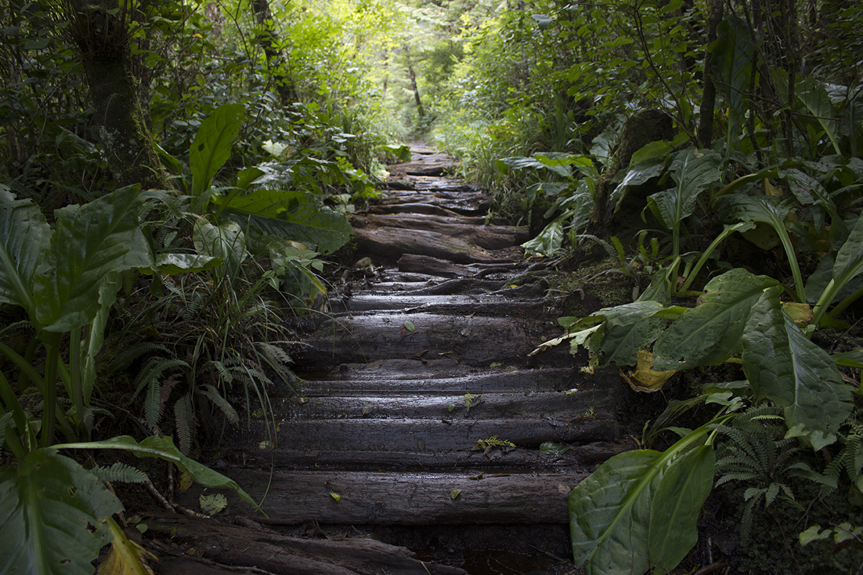 rainforest trail